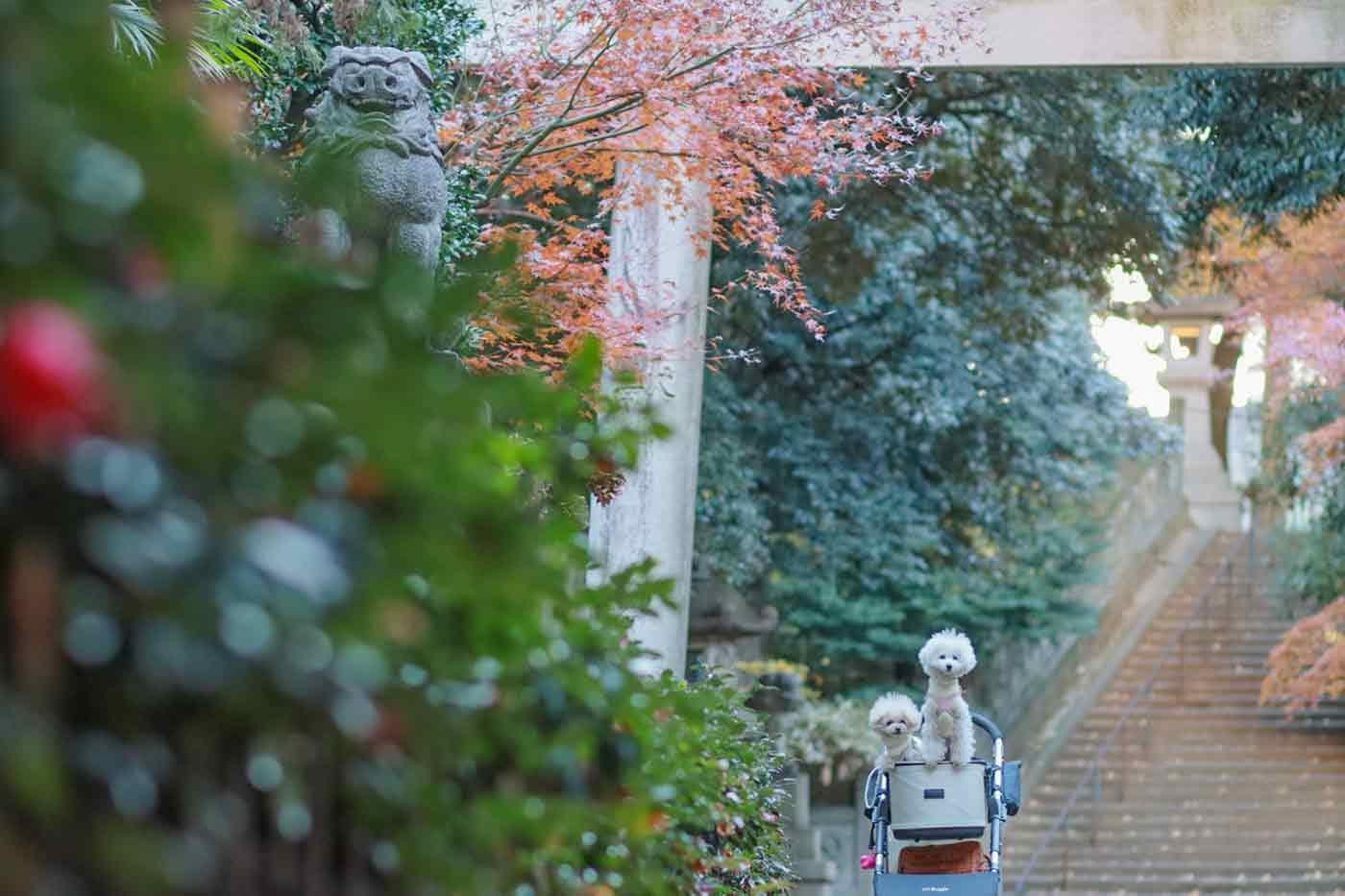 鳥居の下で記念撮影する犬