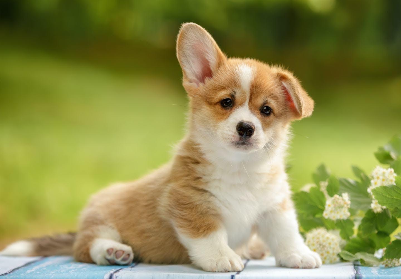 犬の名前をつけるときのコツとは?_犬の名前