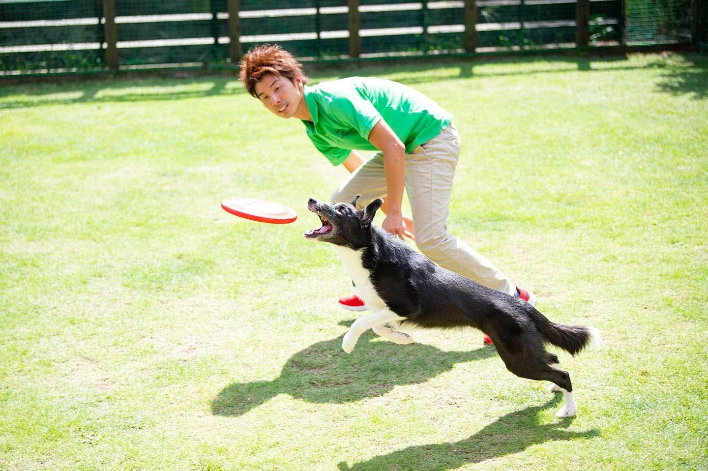 愛犬がジャンプする
