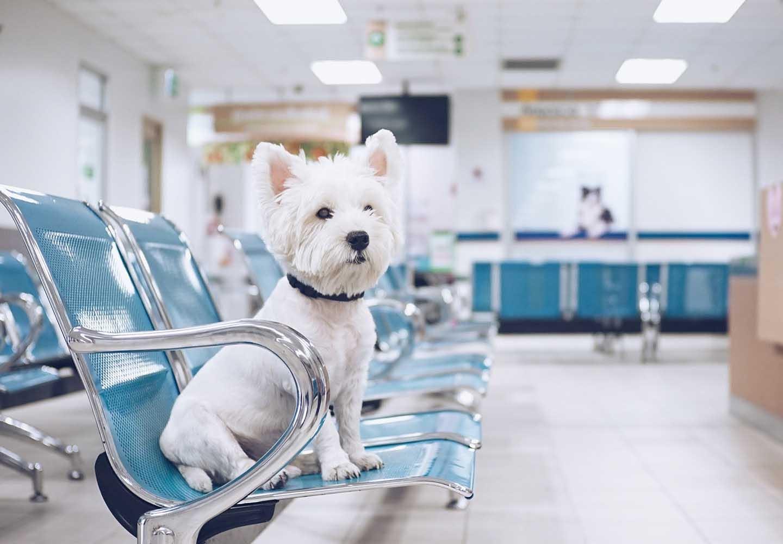 犬の避妊手術の手順とは?_犬の避妊手術