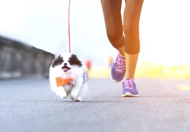 愛犬との絆が深まるドッグスポーツとは?メリットや代表的な4種類の競技について解説_走る犬
