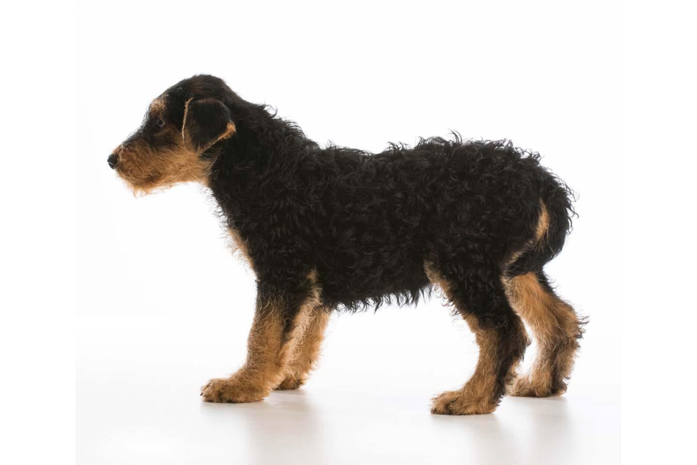 しっぽを股の間に垂らした犬