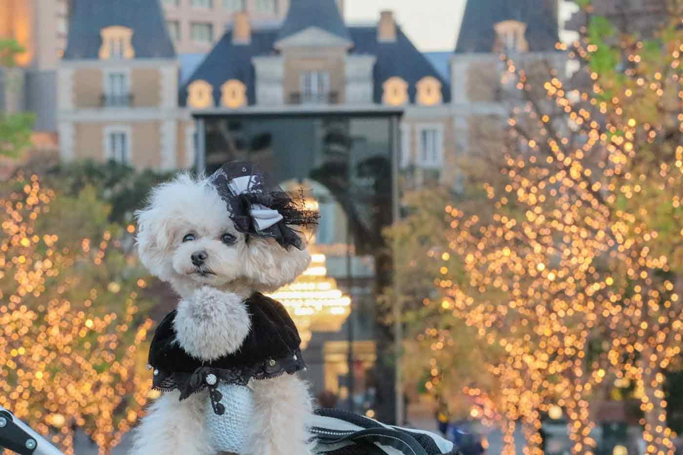 愛犬と恵比寿で散歩