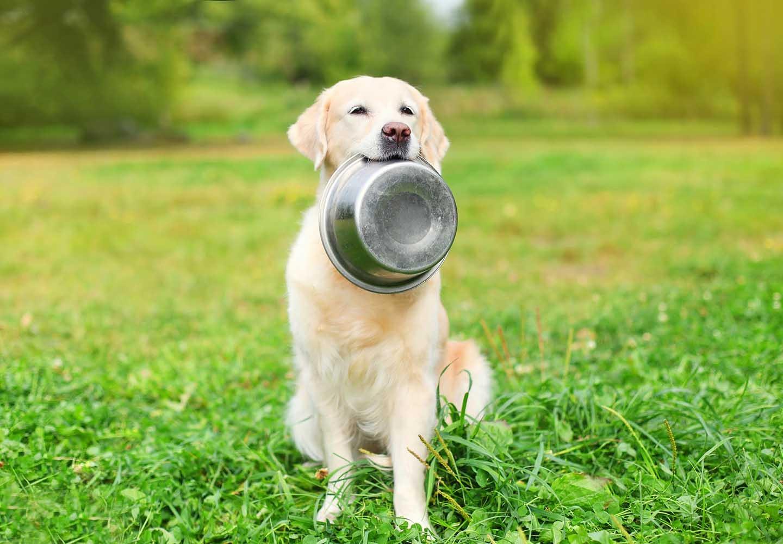 犬は枝豆を食べても大丈夫?適量やおすすめの調理法、大豆アレルギーなどの注意点について解説_トレイをくわえる犬