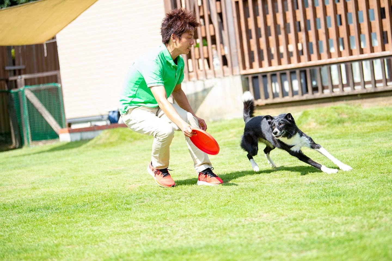 ディスクを追いかける犬