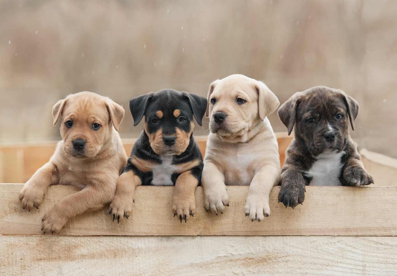 犬の名前をつけるときのコツとは?犬が覚えやすい名前の例や、2020年の人気ネームも紹介!