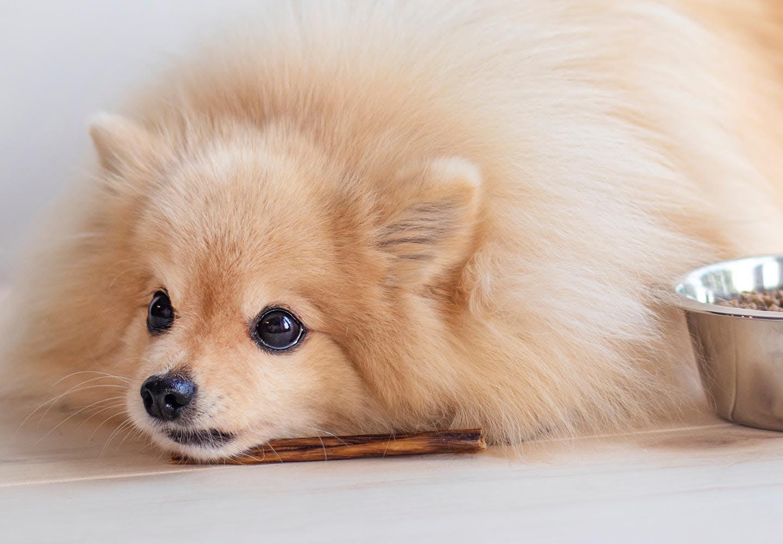 犬にネギが危険な理由とは?中毒症状や誤食したときの対処法、食べないようにするための予防策などについて解説_ボウルの横で寝そべる犬