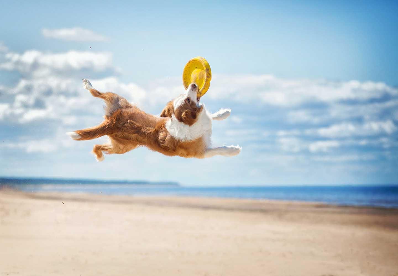 愛犬との絆が深まるドッグスポーツとは?メリットや代表的な4種類の競技について解説_キャッチする犬