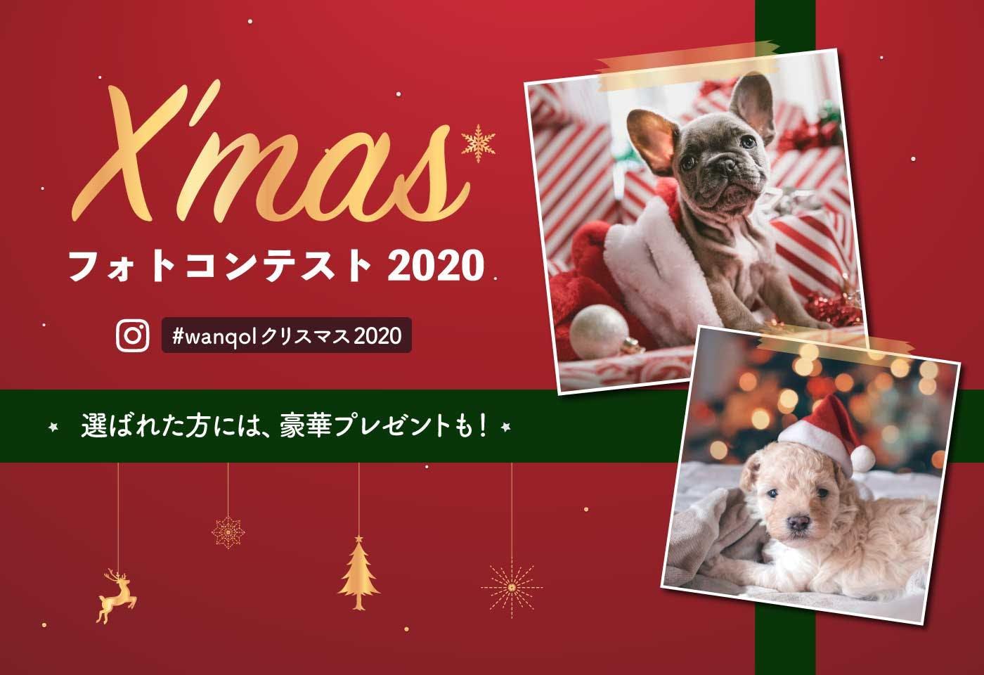 【豪華賞品付き♪】わんクォールクリスマスフォトコンテスト2020開催!