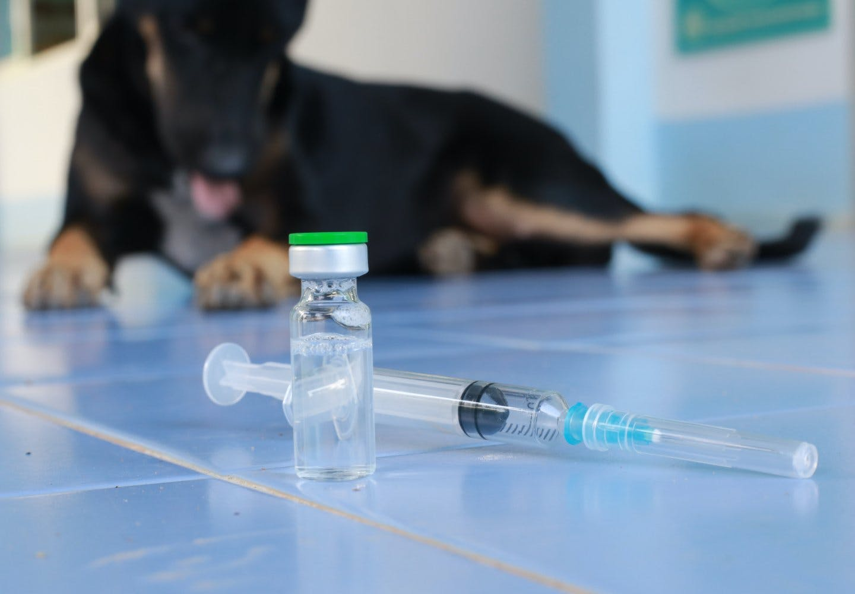 犬のワクチン接種は必要?_ワクチンを打つ犬