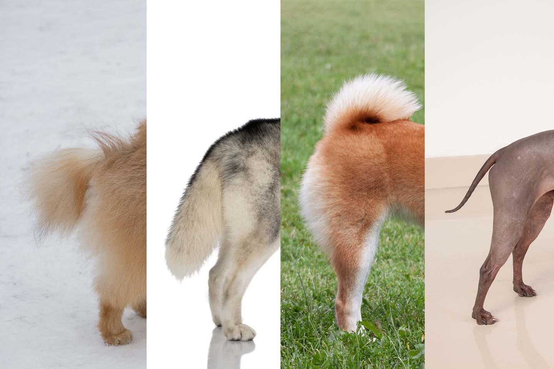 さまざまな犬種のニュートラルなしっぽ位置