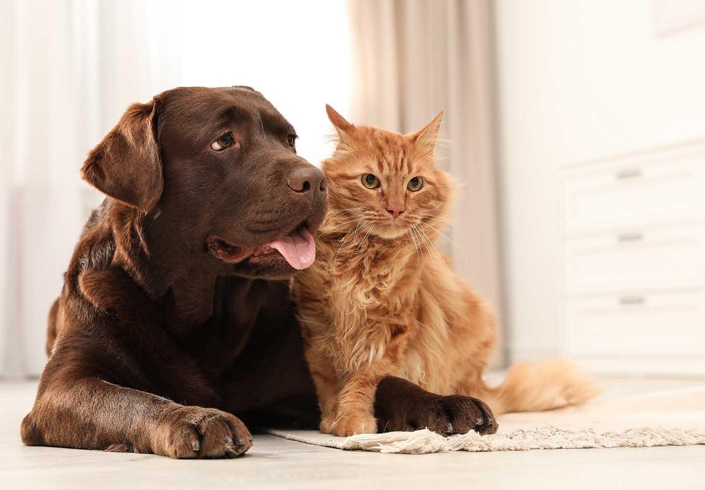 【獣医師監修】犬と猫を一緒に飼っても大丈夫?それぞれの習性の違いと迎える順番、餌の与え方の注意点などについて解説
