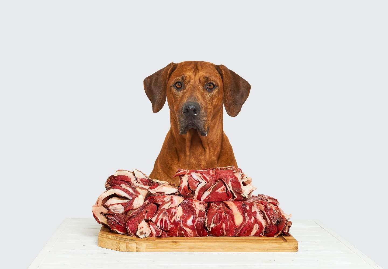 【獣医師監修】犬に生肉を食べさせるのはNG!?どんなリスクがあるのか、誤食した際の対処法などについて解説