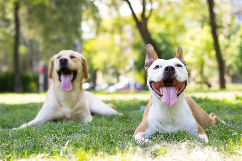 【獣医師監修】犬の去勢手術は必要?メリット・デメリットや費用、術後の注意点などを解説