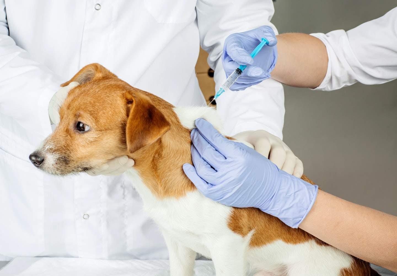 【獣医師監修】犬のワクチン接種は必要?予防できる病気やどんな種類があるのか、接種前の注意点などについて解説