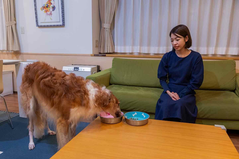 那須フォレストヒルズ 体験レポート ご飯を食べる犬