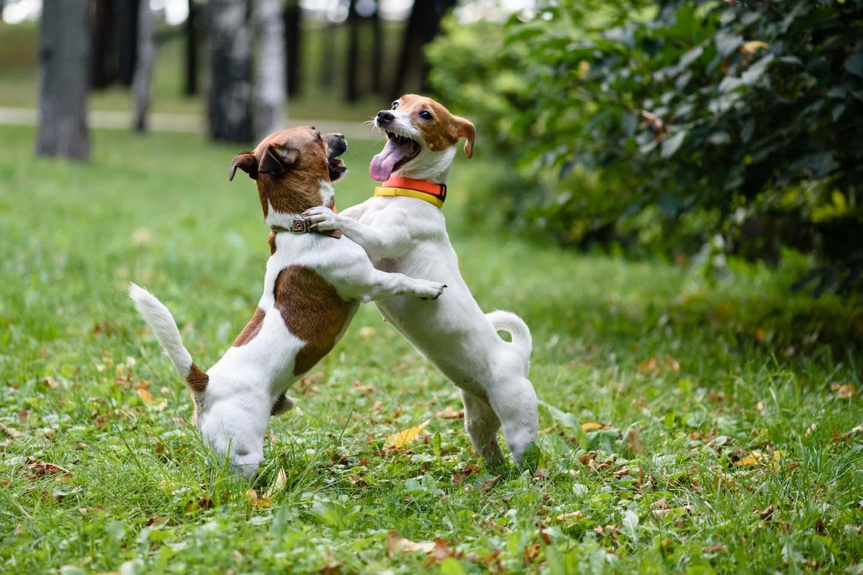 友達と会って嬉しい犬
