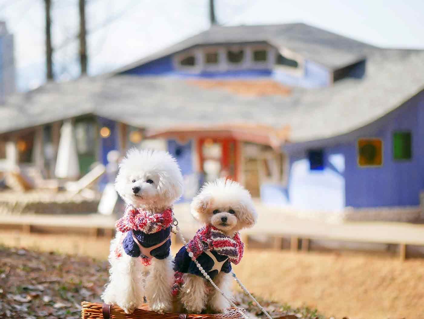 【埼玉】愛犬とムーミンの世界にいこう♪トーベ・ヤンソンあけぼの子どもの森公園とジョンソンタウンにお出かけ