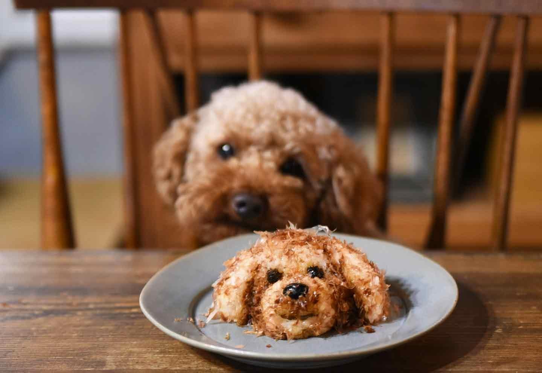 【SNSで話題】#わんこおにぎりで投稿しよう!考案者が教える作り方のコツ&他犬種のアレンジ法も紹介♪