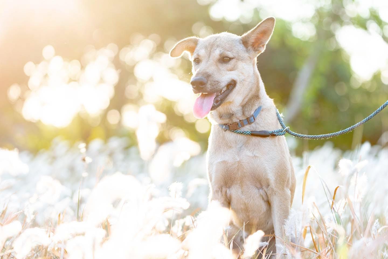 浅速呼吸する犬