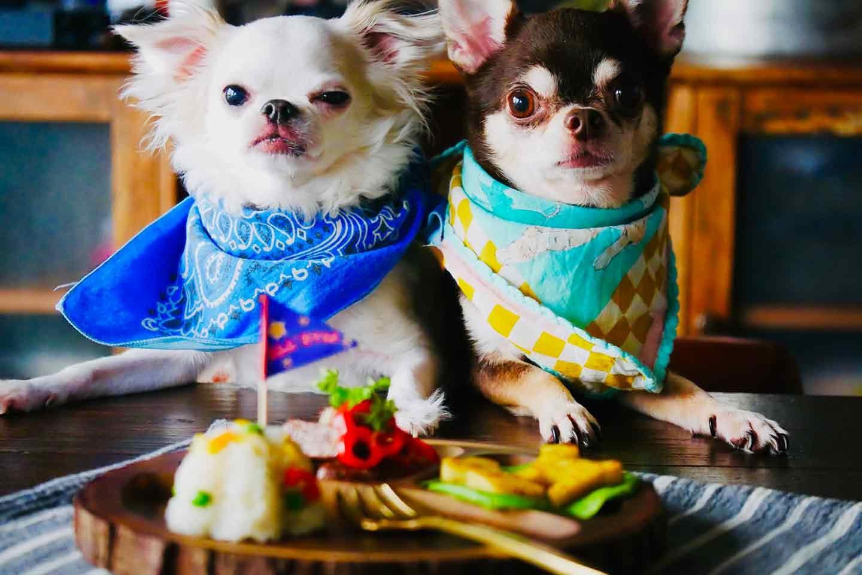 愛犬手作りごはんレシピ お子さまランチ チワワ