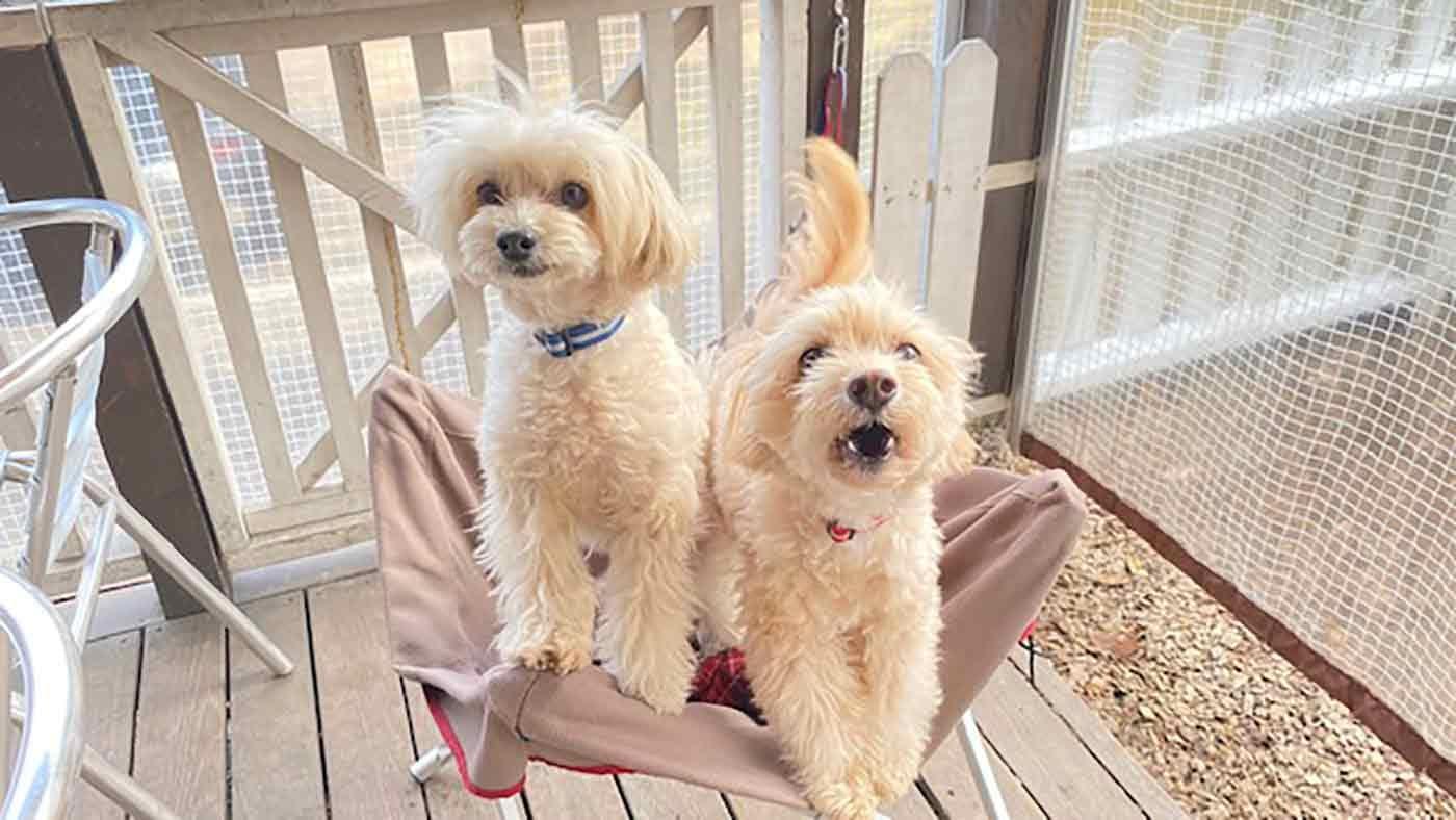 愛犬とクリスマスキャンプ ランチ