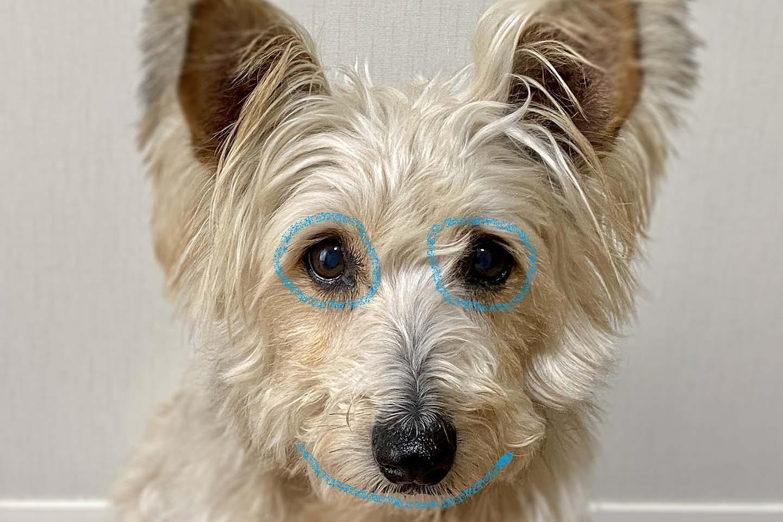 犬の顔のマッサージ