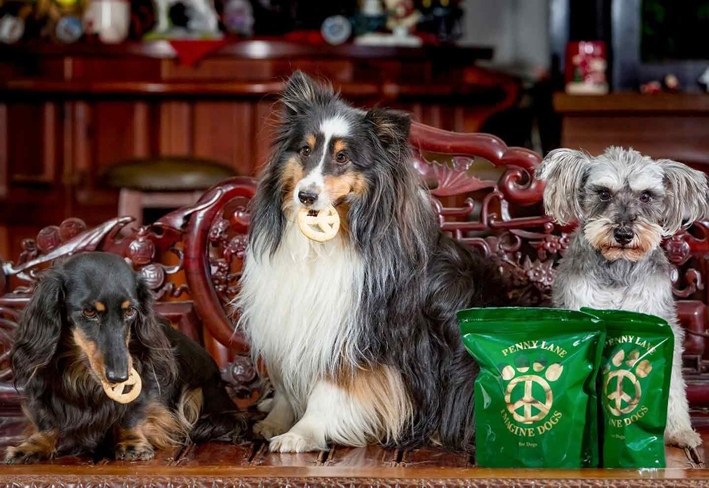 ペニーレインの店内でおやつを食べる犬