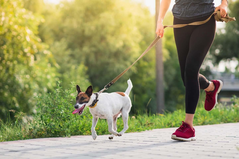 飼い主と運動する犬