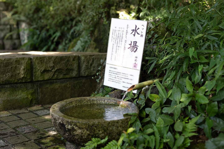 ペット用の水場