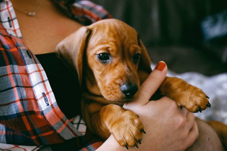 人のストレスは犬に伝染する!?愛犬に不安を与えないために飼い主が気をつけるべきことは?【Dr.茂木が教える最新いぬ塾Vol.03】