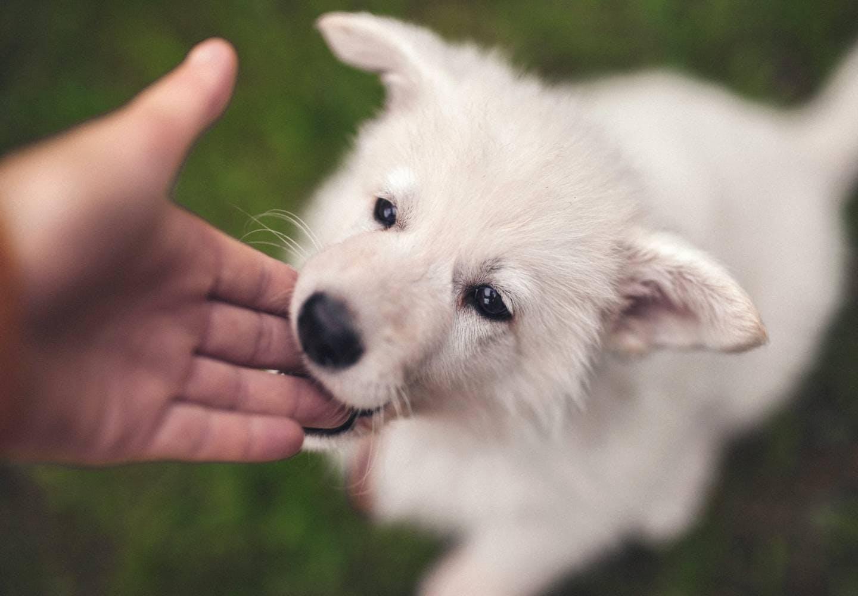 犬が甘噛みする理由とは?_甘噛みする犬