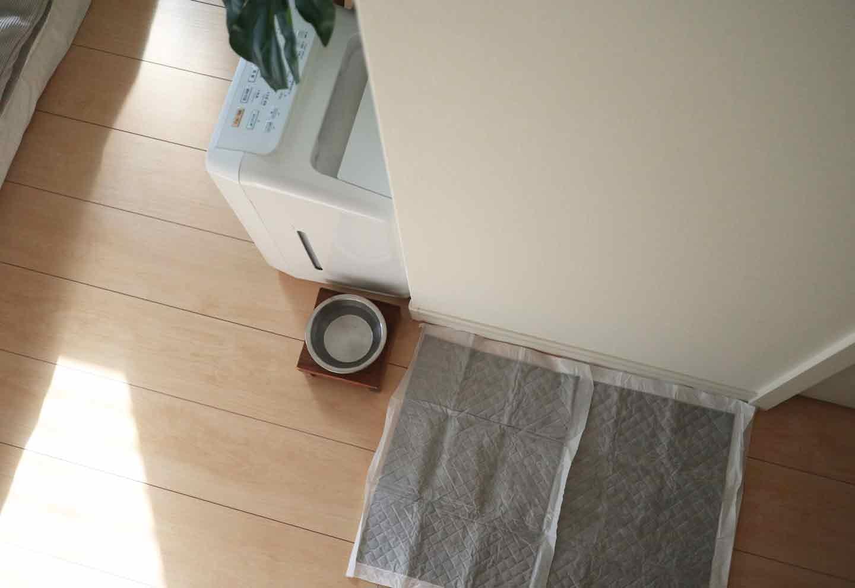 愛犬との寝室 インテリア 水飲み場とトイレ