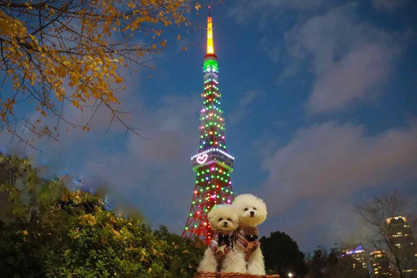 東京タワーと愛犬