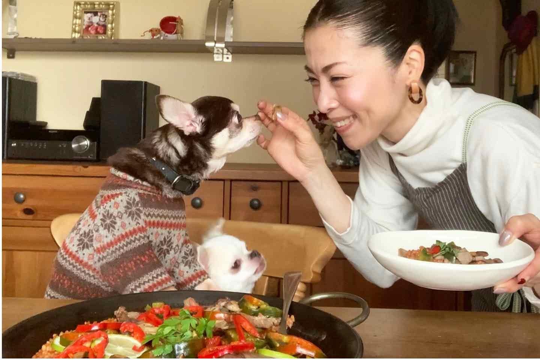 【簡単ジビエ飯】猪肉パエリアは食いつき&栄養抜群!《愛犬手作りごはんレシピ》
