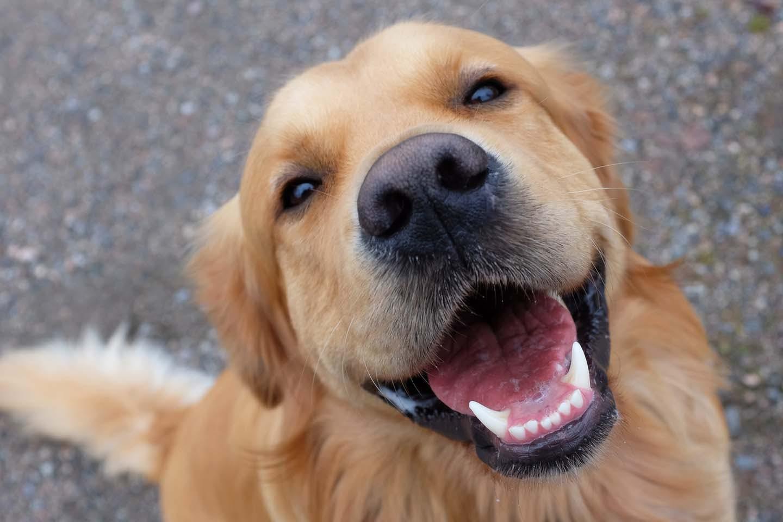 【獣医師監修】犬の歯石取りはどうすればいい?原因と対処法、病院で除去するときの手順などについて解説