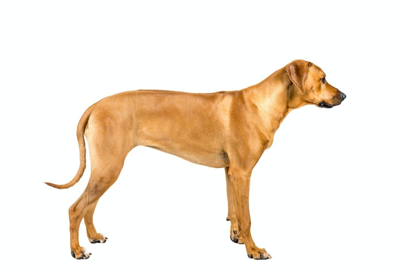 犬の骨格ってどうなっているの?_犬の骨格