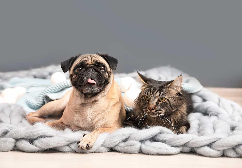 犬と猫を一緒に飼っても大丈夫?_犬と猫