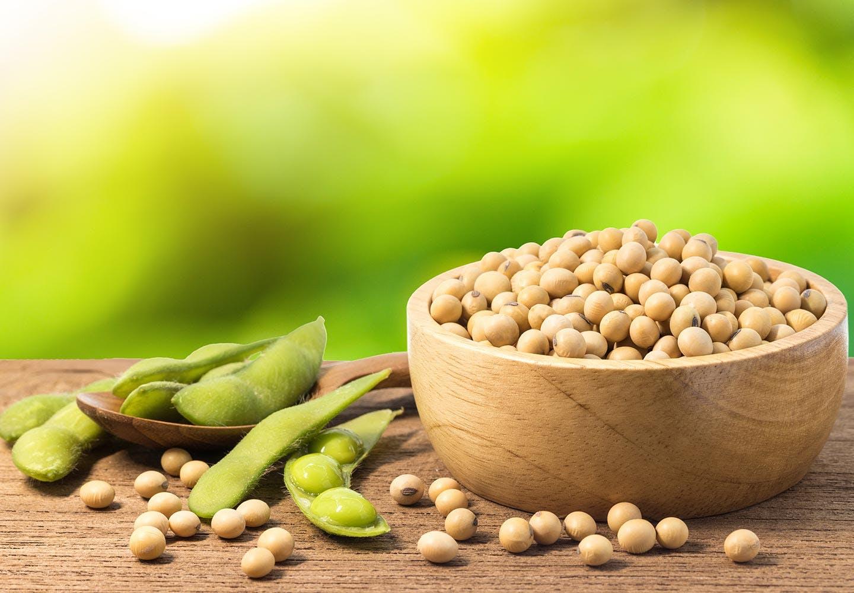 犬は大豆を食べても大丈夫? 大豆と枝豆