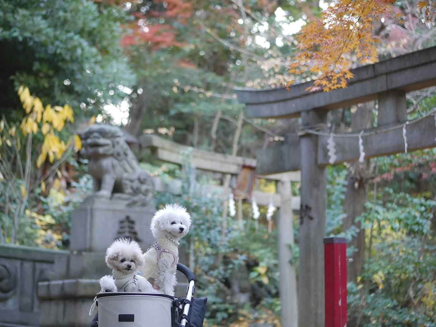 自然豊かな氷川神社と犬