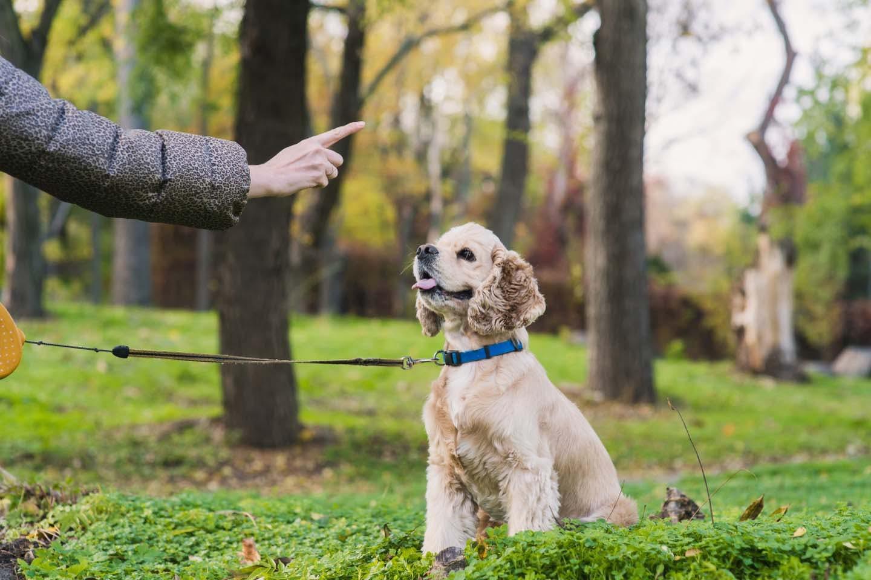 人の指差しを見る犬