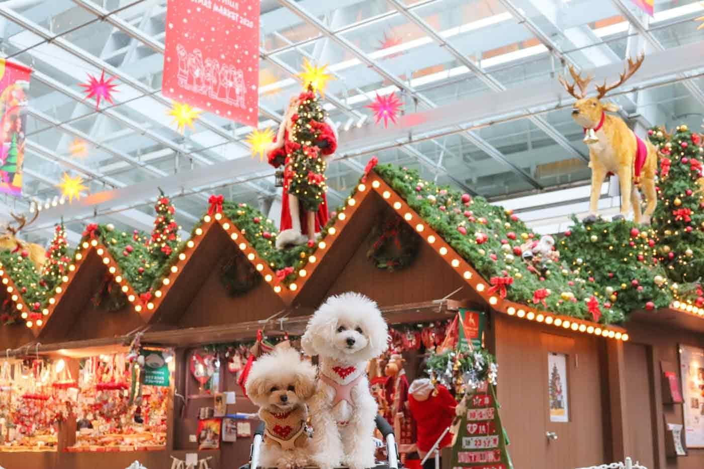 クリスマスマーケットと犬