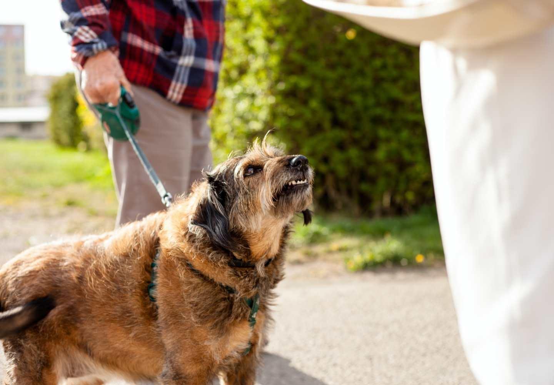 【獣医師監修】犬が唸る理由とは?その時の心理状態や注意点、やめさせるためのしつけ方法などについて解説