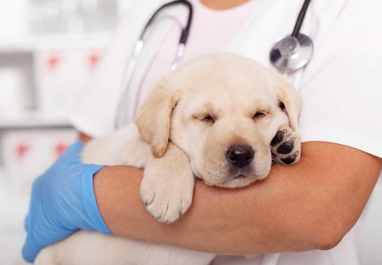 犬の平熱は何度?上手に体温を測る方法や低体温・高熱のときの対処法などについて解説_抱えられる犬