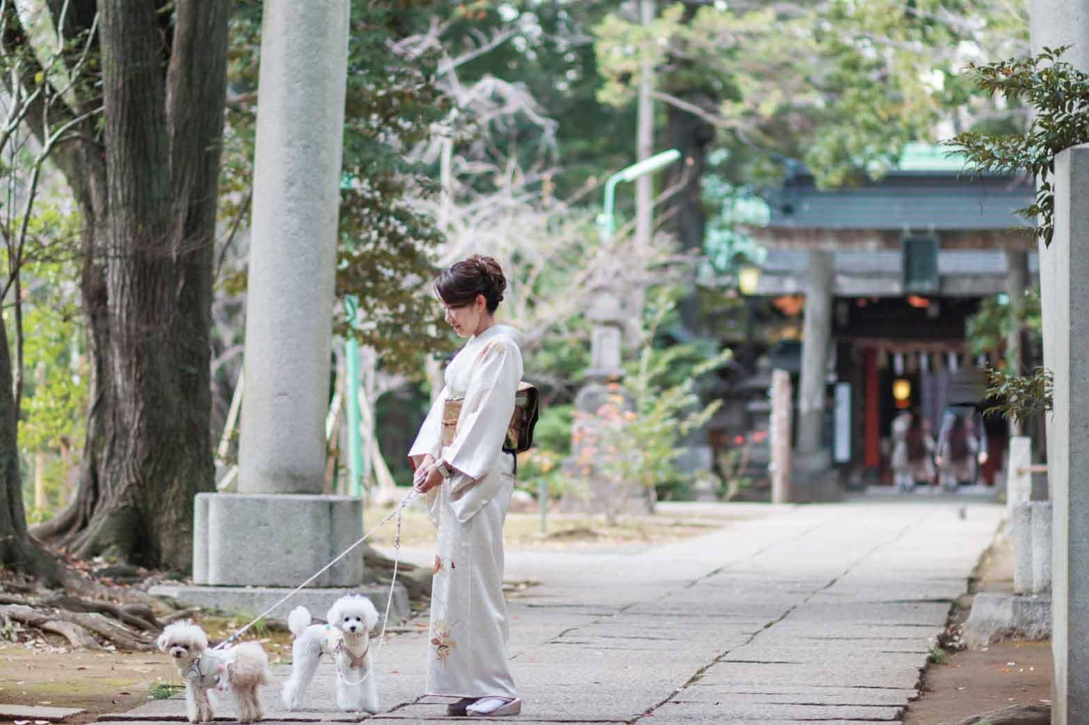 【赤坂】都内で愛犬と初詣!わんちゃんOKな赤坂氷川神社と周辺ランチ♪