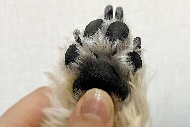 犬の肉球のマッサージ