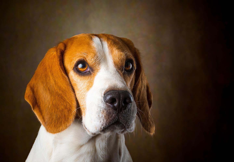 【獣医師監修】犬の気持ちを知る方法とは?表情、尻尾、カーミングシグナルなどの仕草から読み取れる感情を解説