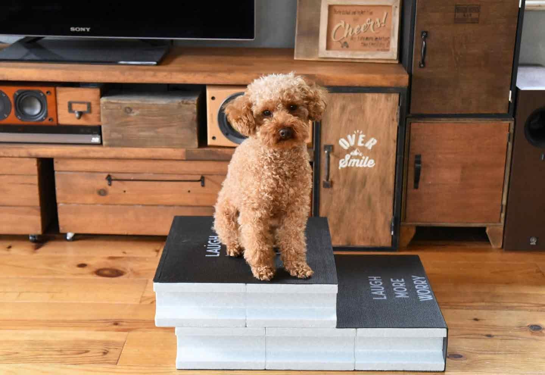 【小型犬・高齢犬向け】15分DIY!100均ブロックのお手軽ステップで愛犬の身体の負担を減らしてあげよう♪