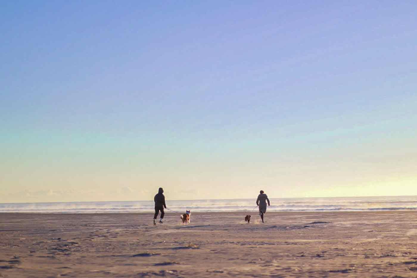 片貝海浜浴場を愛犬と散歩