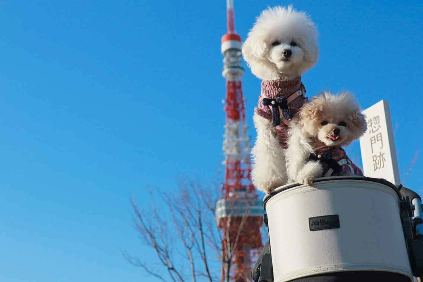 【東京タワー周辺】NO密!な冬のお散歩コースをご紹介♪店内わんちゃんOKランチも!